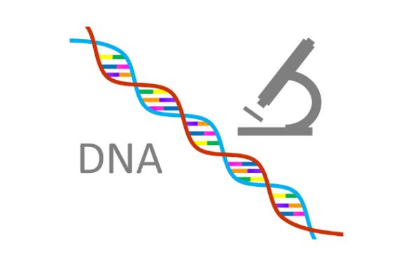 盛岡探偵のDNA鑑定による浮気調査