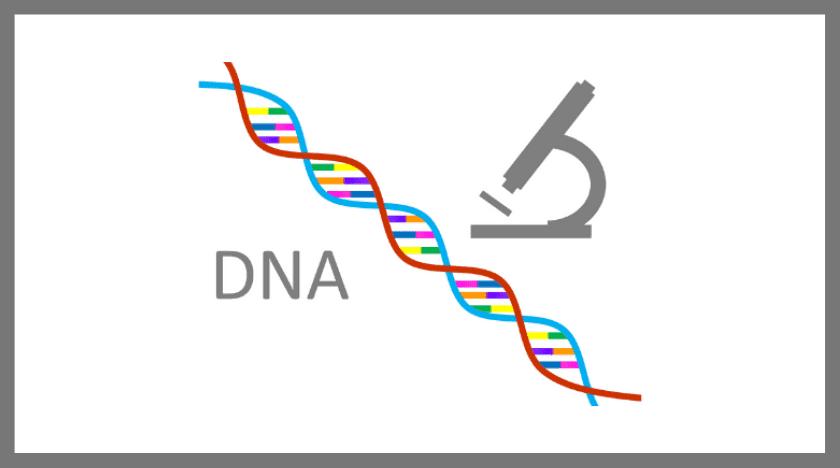 岩手盛岡探偵のDNA鑑定による浮気調・不倫調査
